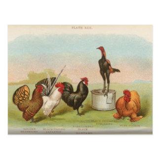 Bantams Post Card