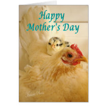 Banty hen & chick2-personalize as desired card