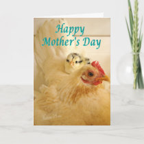 Banty hen & chick card