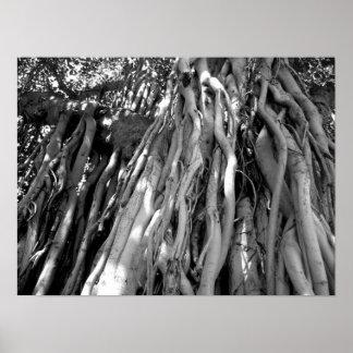 Banyan Impresiones