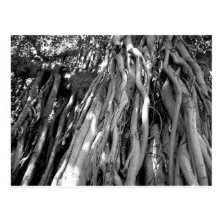 Banyan Postcard