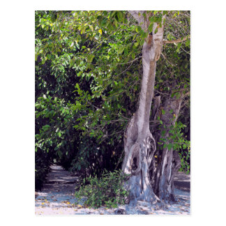 Banyan Street Postcard