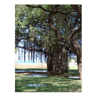 Banyan Tree 1 Postcard