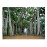 banyan, banyan tree, edison, thomas edison, edison