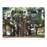 Banyan Tree Post Cards