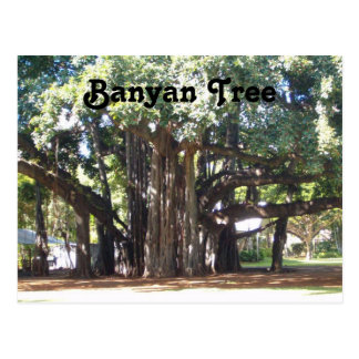 Banyan Tree Post Cards
