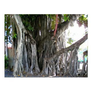 Banyan Tree Postcard