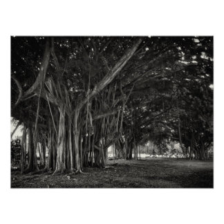BANYAN TREE ROOT STRUCTURE PRINT