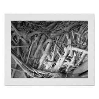 Banyan Tree Roots Posters
