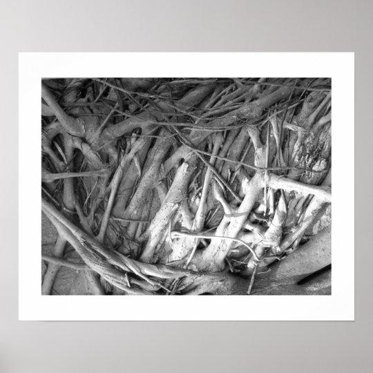 Banyan Tree Roots Poster