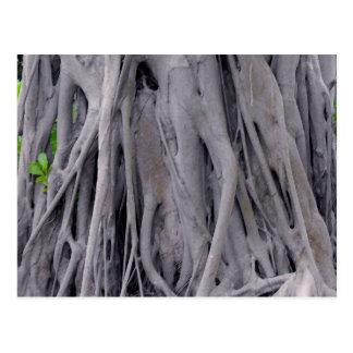 Banyan Tree Trunk Postcard