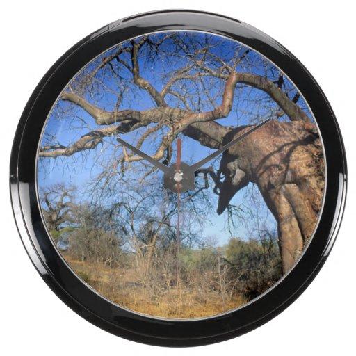 Baobab (Adansonia Digitata), Kruger National Fish Tank Clocks