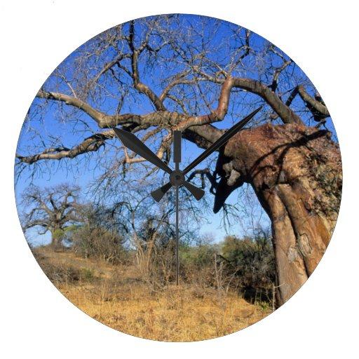 Baobab (Adansonia Digitata), Kruger National Clocks