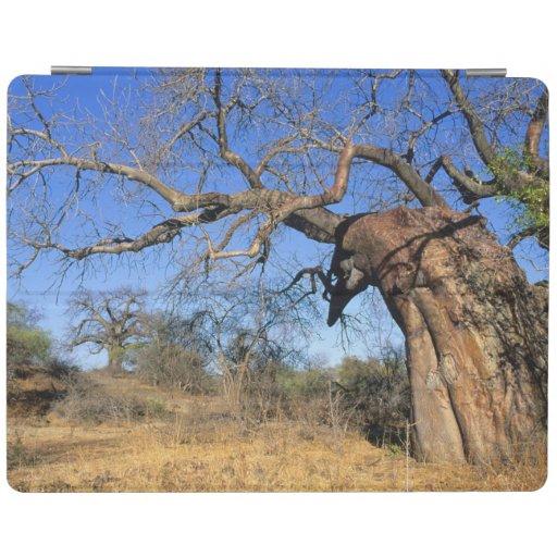 Baobab (Adansonia Digitata), Kruger National iPad Cover