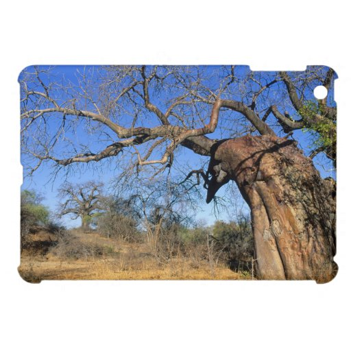Baobab (Adansonia Digitata), Kruger National iPad Mini Cases