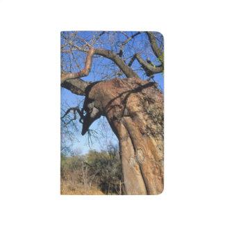 Baobab (Adansonia Digitata), Kruger National Journal