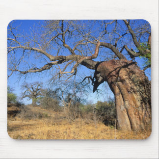 Baobab (Adansonia Digitata), Kruger National Mouse Pad