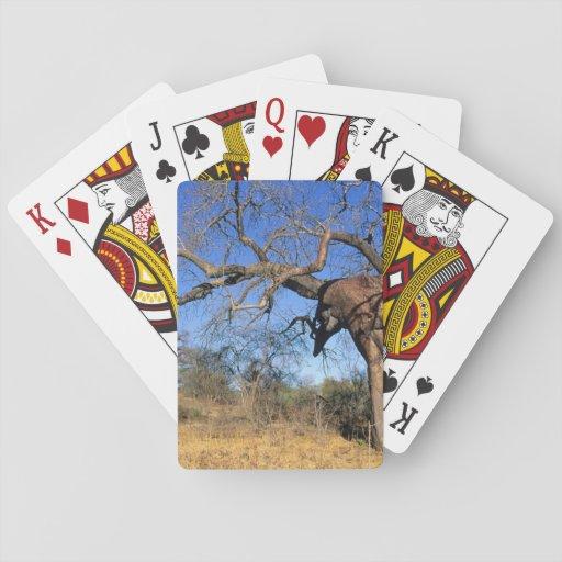 Baobab (Adansonia Digitata), Kruger National Playing Cards