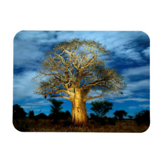 Baobab (Adansonia) Tree Light Up By The Moon Magnet