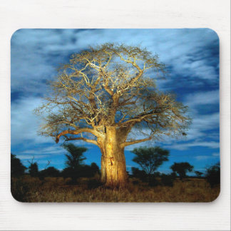 Baobab (Adansonia) Tree Light Up By The Moon Mouse Pad