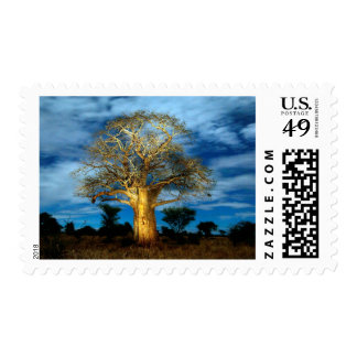 Baobab (Adansonia) Tree Light Up By The Moon Postage Stamps