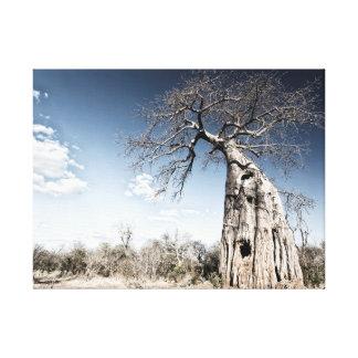 Baobab Tree at Mana Pools National Park, Zimbabwe Canvas Print