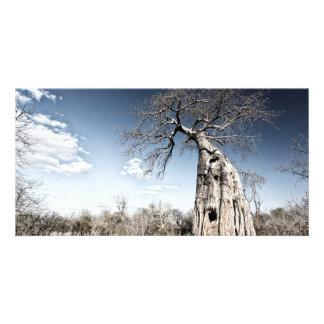 Baobab Tree at Mana Pools National Park, Zimbabwe Card