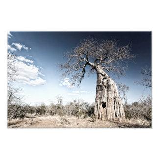 Baobab Tree at Mana Pools National Park, Zimbabwe Photo Print