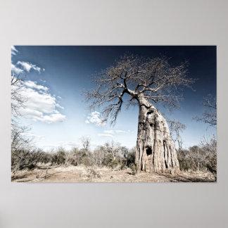 Baobab Tree at Mana Pools National Park, Zimbabwe Poster