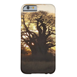 Baobab tree at sunset barely there iPhone 6 case