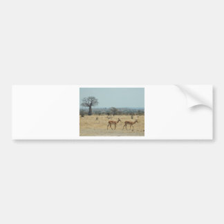 Baobab Tree Branch Personalize Destiny Destiny'S Bumper Sticker