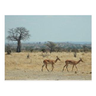 Baobab Tree Branch Personalize Destiny Destiny'S Postcard