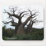 Baobab Tree Mousepad