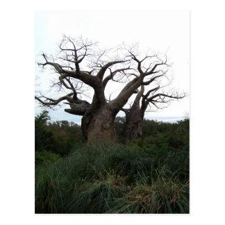 Baobab Tree Postcard