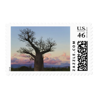 Baobab trees, Berenty, Toliara, Madagascar Postage Stamps