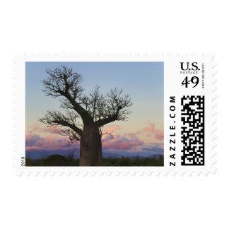 Baobab trees, Berenty, Toliara, Madagascar Postage Stamp