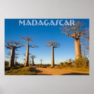 Baobabes de Madagascar Poster