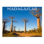 Baobabes de Madagascar Postal