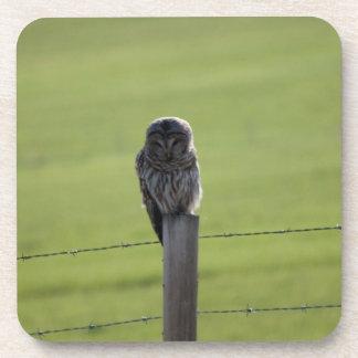 BAOW Barred Owl Beverage Coaster