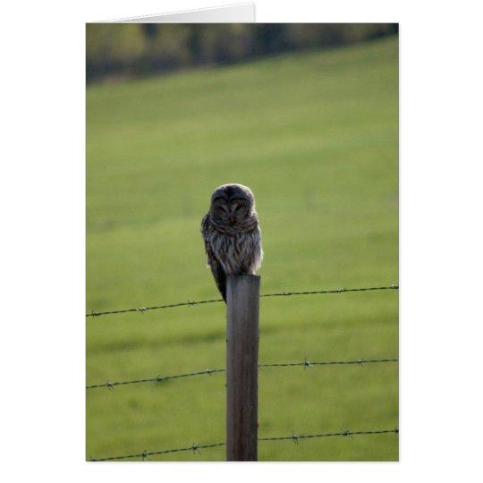BAOW Barred Owl Card