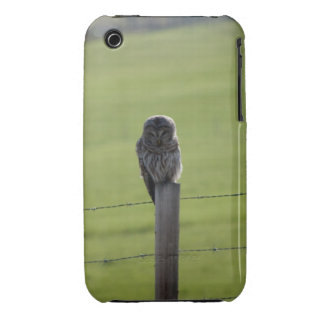 BAOW Barred Owl iPhone 3 Cover