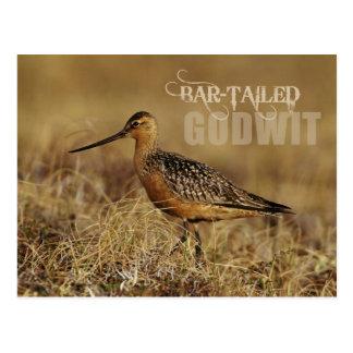 Bar-tailed Godwit, Alaska Postcard