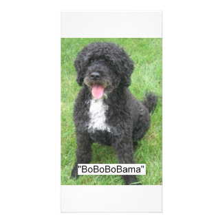 Barack Obama Portuguese Water Dog Custom Photo Card