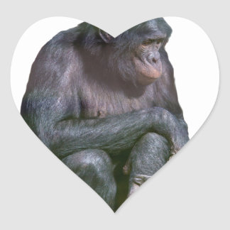 Barato como chimpancés pegatina en forma de corazón