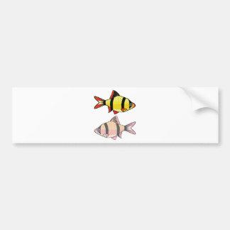 Barb Aquarium fish Bumper Sticker