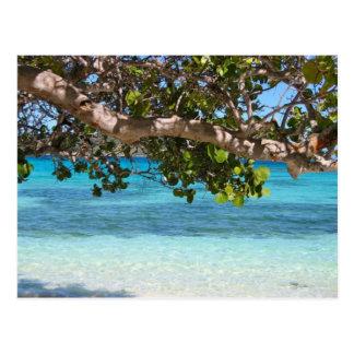 Barbados Beach Scenery Postcard