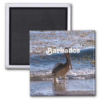 Barbados Brown Pelican Fridge Magnet