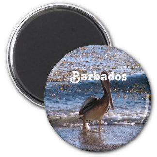 Barbados Brown Pelican Magnets