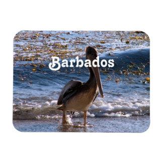 Barbados Brown Pelican Vinyl Magnets