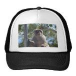 Barbary Ape Hats